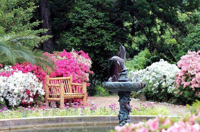 Ботанический сад Батуми