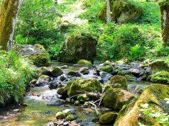 Однодневная экскурсия в заповедник Мтирала, Батуми