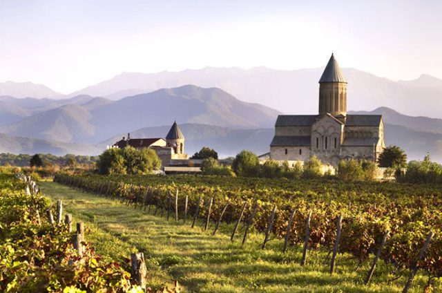Ртвели, участие в сборе винограда, Туры по Грузии